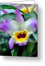 Orchid 34 Greeting Card