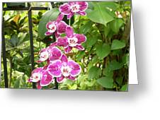 Orchid #4 Greeting Card