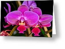 Orchid 422 Greeting Card