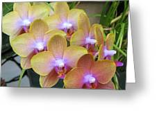 Orchid 7 Greeting Card