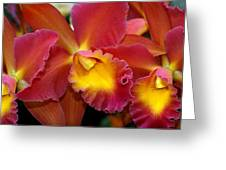 Orchid 8 Greeting Card