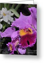 orchid 942 Purple Brassolaeliocattleya  Greeting Card