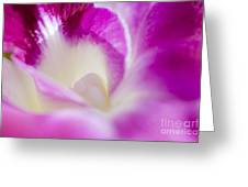 Orchid Abstract Greeting Card