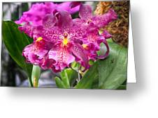 Orchid Aliceara Marfitch Greeting Card