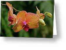 Orchid Aliveness Greeting Card