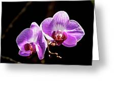 Orchid At Fairchild Gardens Greeting Card