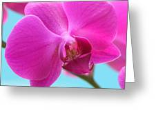 Orchid At The Ocean Closeup Greeting Card