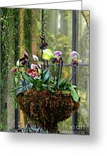 Orchid Basket Greeting Card