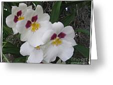 Orchid Beauties Greeting Card