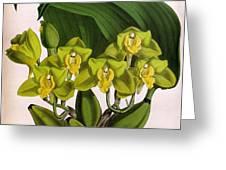 Orchid, Bifrenaria Aurantiaca, 1891 Greeting Card
