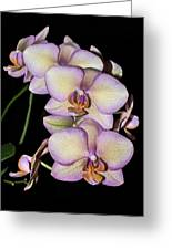 Orchid Blossoms I Greeting Card