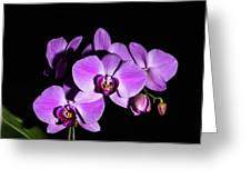 Orchid Blossoms IIi Greeting Card