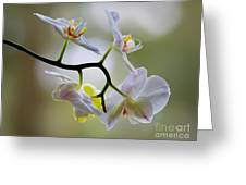 Orchid C Greeting Card