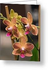 Orchid Chingruey's Goldstaff Greeting Card