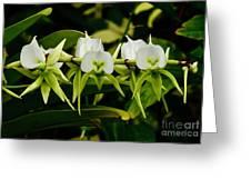 Orchid Choir Greeting Card