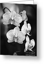 Orchid Cluster Close-up Greeting Card