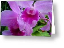 Orchid Deep Greeting Card