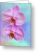 Orchid Delight - Two Blooms Against A Rainbow Background Greeting Card