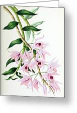 Orchid, Dendrobium Macrophyllum, 1880 Greeting Card