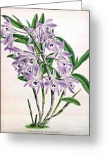 Orchid, Dendrobium Transparens, 1891 Greeting Card