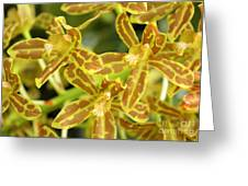 Orchid Drama Canvas Greeting Card