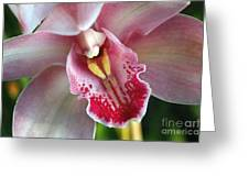 Orchid Dust Greeting Card