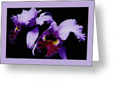 Orchid Elegance Greeting Card
