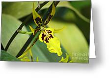 Orchid Expression 4237 Greeting Card