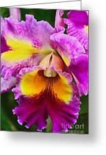 Orchid Expression 9550 Greeting Card