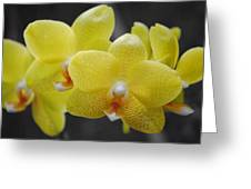 Orchid Family Greeting Card