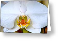Orchid Fire Greeting Card