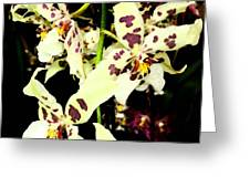 Orchid Fresco Greeting Card