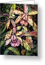 Orchid Garden Greeting Card by Ann  Nicholson