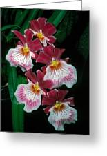 Orchid Group Greeting Card