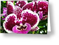 Orchid Hanging In Palms Greeting Card