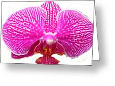Orchid I Pretty Greeting Card