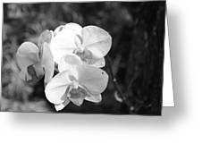 Orchid In Black And White Greeting Card