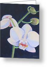 Orchid In Blue Greeting Card