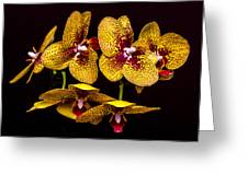 Orchid In Space Greeting Card