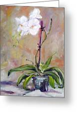 Orchid In White 3 Greeting Card