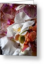 Orchid Iv Greeting Card