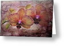 Orchid Layers Greeting Card
