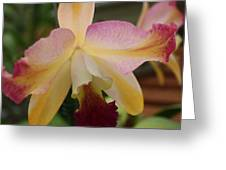 Orchid Light Greeting Card