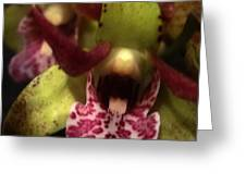 Orchid Lights Greeting Card