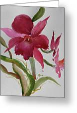 Orchid Morning Greeting Card