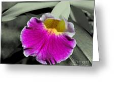 Orchid Of A Different Color Greeting Card