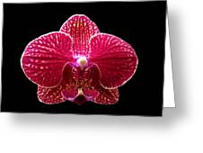 Orchid On Black 2 Greeting Card