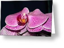 Orchid Orchid Greeting Card