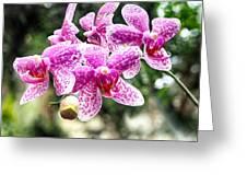 Orchid Phalaenopsis Carnival Bonsall Greeting Card