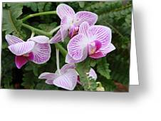 Orchid Pink Greeting Card